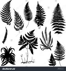 Collection Of Fern Silhouettes Stock Photo 8058781 Avopixcom
