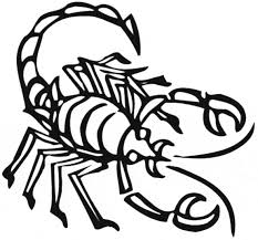 Small Picture Scorpion coloring page Animals Town animals color sheet