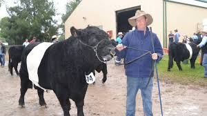 winner peter munday from caloola with his chion belted galloway bull which took out the