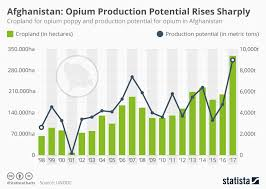 Chart Steep Rise In Poppy Cultivation And Production Of