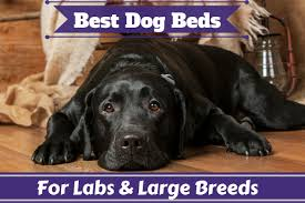 Dog bedroom furniture Multiple Dog Best Dog Beds For Large Dogs And For Labs Reviewed Updated 2018 Dog Bedroom Wallpaper Dog Bedroom Furniture Jimmy Dorsey Best Dog Beds For Large Dogs And For Labs Reviewed Updated 2018 Dog