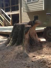 diy stump removal