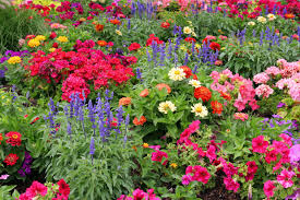 flowers garden. Garden Flowers For And Gardensdecor Gardening Guide G