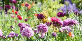 garden flowers. Types Of Flowers Garden Country Living Magazine