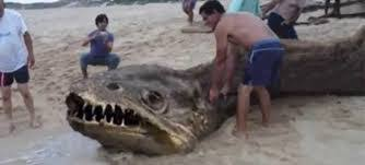sea monster found 2014.  Sea For Sea Monster Found 2014 E