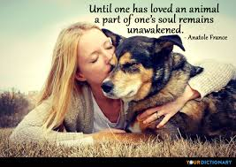 Until One Has Loved An Animal A Part Of One's Soul R Anatole New Love Animal Quotes