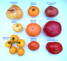 Tomato Color Chart Tomato Fruit Color Mutations