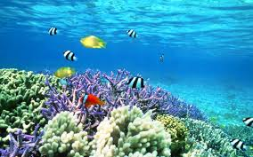 animated aquarium wallpaper for windows 7 free. Perfect Free 3d Animated Aquarium Wallpaper Free Download  33CCEE Color Underwater  Fishes Sea Ocean Nature Fish Sealife Inside Animated Aquarium Wallpaper For Windows 7 Free A