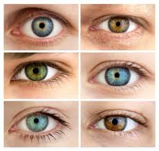 Eye Color Chart Understanding Eye Color Optical Masters