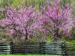 allergy friendly garden