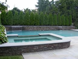 view in gallery cypress trees provide privacy to a pool area
