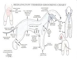 Dog Haircut Chart Grooming Chart Dog Grooming Styles Cleaning Dogs Ears