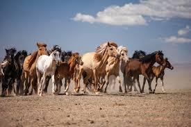 """Résultat de recherche d'images pour """"chevaux sauvage"""""""