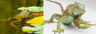 Difference Between Amphibians And Reptiles Venn Diagram Difference Between Amphibians And Reptiles With Comparison