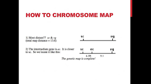 Gene Mapping Problems Linked Genes And Chromosome Mapping