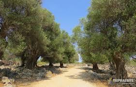 slika u slideru lun olive gardens