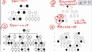 Pedigree Chart Interpreting Pedigree Charts