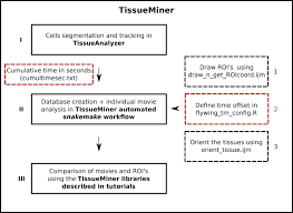 Ijm Organization Chart Tissueminer A Multiscale Analysis Toolkit To Quantify How