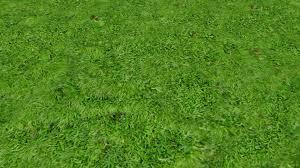 carpet moss. preview carpet moss