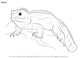 Small Picture Learn How to Draw a Tuatara Reptiles Step by Step Drawing