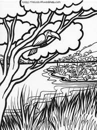 Jungle Coloring Pages Free Description Of