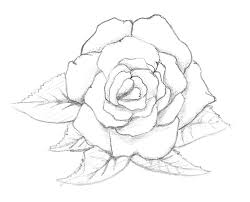 Small Picture 92 best Drawings of Flowers images on Pinterest Draw Drawing