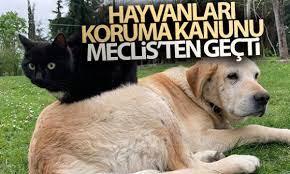 Hayvanları Koruma Kanunu ile Türk Ceza Kanununda Değişiklik yapılmasına  Dair Kanun Teklifi kabul edildi