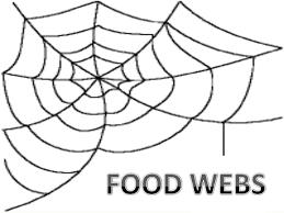 food chainfood web and ecological pyramids 11 638?cb=1393800653 food chain,food web and ecological pyramids on food web worksheet pdf