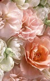 Creamy Pink & Peach Roses & Peonies #estella #flowers #flora | Pretty  flowers, Flowers, Beautiful flowers