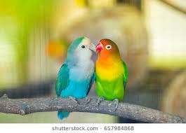 purple love birds clipart. Delighful Clipart Purple Love Birds Clipart Free Images To