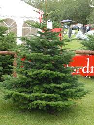 Different Types Of Christmas Trees For Sale Stock Photo Royalty Types Of Fir Christmas Trees
