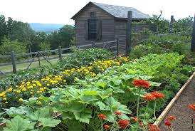 Image result for vegetable patch