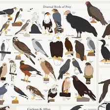 Birds Of North America Birds Rare Birds California Condor