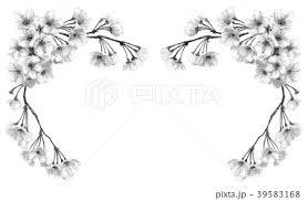 水彩で描いた桜のフレーム素材モノトーンのイラスト素材 39583168 Pixta