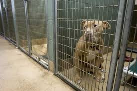 animal shelters sad. Beautiful Sad Sad Dog And Animal Shelters Sad G