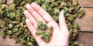 best strain for breast cancer