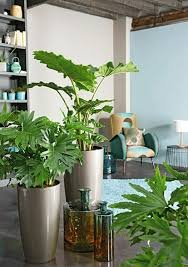 Indoor Plants Living Room Feng Shui Plants About The Protection And Convenience Of Indoor