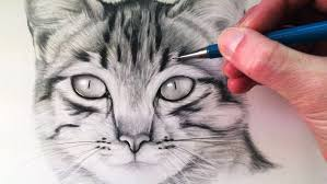 realistic cat drawing in pencil. Plain Pencil Inside Realistic Cat Drawing In Pencil O