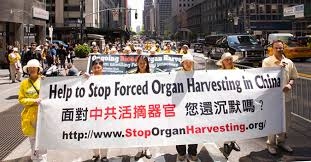 Image result for harvest organs, china