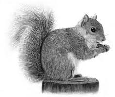 Small Picture how to draw a realistic squirrel Google Search Crafts