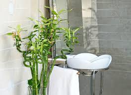 ced2ae4f86f913605012edb57697206a best office plants no sunlight