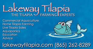 Tilapia Farming Guide Understanding The Five Needs Of Tilapia