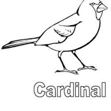 Small Picture Coloring Page Cardinal Bird Archives Mente Beta Most Complete