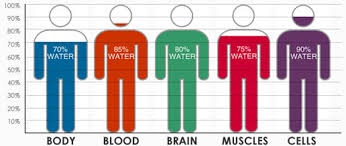 Body Percentage Weight Online Charts Collection