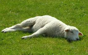 Image result for he makes me lie down in green pastures