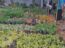plant nursery my location polwatta plant nursery