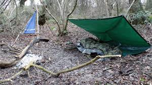 camping in the woods.  The On Camping In The Woods M