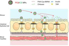 epithelial barrier for delivery
