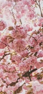 ni91-spring-flower-pink-blossom-bokeh ...