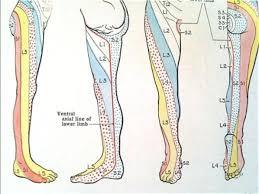 Dermatome Chart Of Pain Path By Dr Steven J Dolgoff